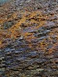 Mola quente no parque nacional de Mammoth Hot Springs Yellowstone imagem de stock
