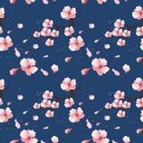 Mola sakura em uma obscuridade - fundo azul fotos de stock