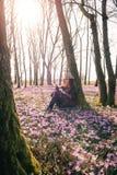 Mola Sun Açafrões de florescência na floresta e em um viajante fêmea Fotos de Stock