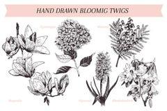 A mola tirada mão do vetor floresce cartaz Arte botânica gravada Ilustração do vintage Mimosa, jacinto, magnólia, rododendro, Imagens de Stock Royalty Free