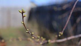 A mola veio, o primeiro verde A natureza acorda Dissolva as primeiras folhas nos ramos Casa verde no filme