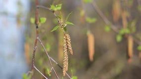 A mola veio, o primeiro verde A natureza acorda Dissolva as primeiras folhas nos ramos Casa verde no vídeos de arquivo