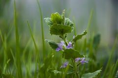 A mola veio, plantas está florescendo fotografia de stock
