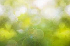 Mola verde abstrata com fundo do bokeh Imagens de Stock