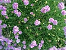 Mola verde das flores Foto de Stock Royalty Free