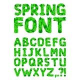 A mola verde folheia fonte Fotografia de Stock Royalty Free
