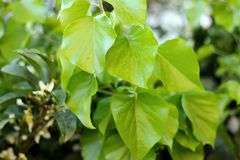 A mola verde fresca sae do fundo do close up fotos de stock