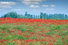 Mola vermelha da paisagem do campo de flor das papoilas Fotos de Stock Royalty Free