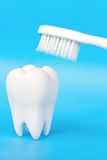 Molar With Brush Royalty Free Stock Images