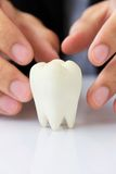 Molar,dental concept Royalty Free Stock Photos