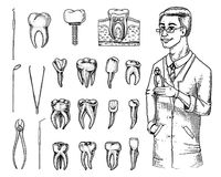 Molar teeth enamel, dental set. instruments equipment of the dentist doctor. oral cavity clean or sick. health or caries. Molar teeth enamel, dental set Stock Images
