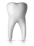 Molar Tooth. Clear Molar Tooth Isolated on white Background. Vector Royalty Free Stock Photos