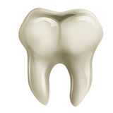 Molar tooth Royalty Free Stock Photos