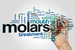 Molars word cloud Stock Photos