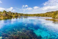 Molas do waikoropupu de Pupu Spring/te em Nova Zelândia Foto de Stock