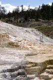 Molas térmicas em Mammoth Hot Springs em Wyoming fotos de stock
