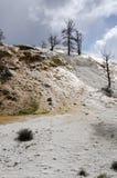 Molas térmicas em Mammoth Hot Springs em Wyoming imagem de stock