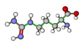 Molécula de la arginina del aminoácido Imagen de archivo libre de regalías