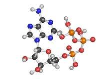 Molécule de transport d'énergie de l'adénosine triphosphate (triphosphate d'adénosine), produit chimique Photos libres de droits