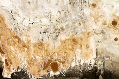 Mold. Bad condition of wall with distincive fungus and mold royalty free stock photos