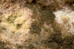 Mold Stock Photography