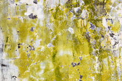 Mold and algae on dirty wall Stock Photography