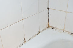 Mold in bathroom. Mold and scale on old bathroom walls stock photography