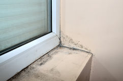 Mold below window. Mold beside and under new window, in the corner of the beige wall and along it stock image