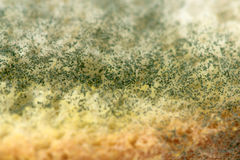 Mold on bread Royalty Free Stock Image