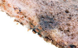 Mold on bread Stock Photography