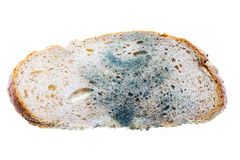 Mold on bread Royalty Free Stock Images