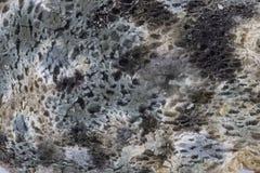Mold on bread closeup Stock Image