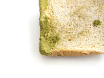 Mold on bread isolated Stock Image