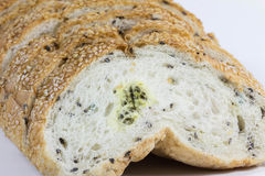 Mold on bread Stock Images