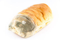Mold on bread Stock Photos