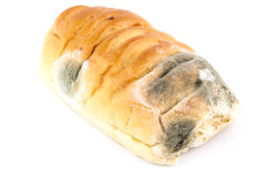 Mold on bread. On white royalty free stock photo
