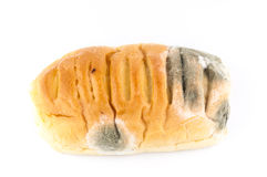 Mold on bread. On white Stock Photography