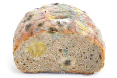 Mold on bread Stock Image
