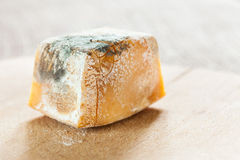 Mold on cheese  Royalty Free Stock Image