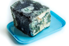 Mold on cheese. spoiled junk food. dairy product. Mold on cheese. spoiled junk food. dairy product Stock Image