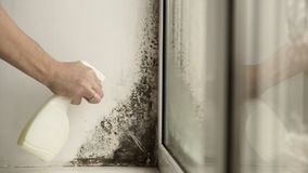 Black mold in the corner of window Preparation for mold removal. stock video footage