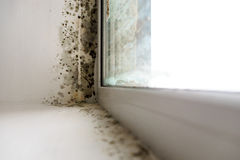 Mold in the corner of the window. Mold in the corner of the window in the room stock photos