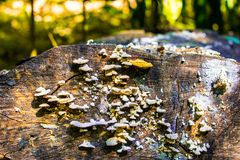Mold on the dead tree stock photography