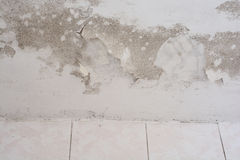 Mold Royalty Free Stock Photography