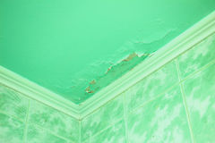 Mold in a edge of a room royalty free stock image