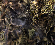 Mold fungus Royalty Free Stock Photo