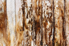 Mold and fungus on damp spruce planks. Result of water infiltration in building royalty free stock image
