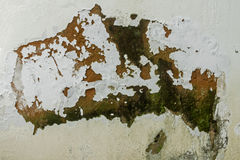 Mold Fungus Peeling Flaking Paint Due to Rising Damp. Green mold fungus and peeling and flaking paint due to rising damp and lack of maintenance on exterior wall royalty free stock photography