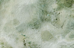 Mold. Fungus and stained textured wall surface royalty free stock photography
