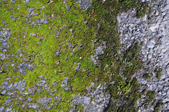 Mold growing on cement Royalty Free Stock Images